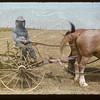 Mike Hoplocke of Box 99 - Kincaid [seated on horse drawn rake wearing mosquito netting]. Hazenmore.  07/22/1955