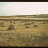 Oats [in stooks].  Eastend  08/28/1942