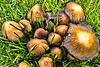Mushrooms, Boulder County, CO (CP-130-2011-05-25)