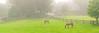 Barryfield Mist 9:25AM / June / Lincoln, MAMorning haze