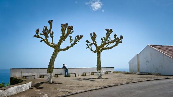 "Man, Two Trees, a Cloud12:10 PM | April | Nordeste ""Almost"" Cloudless sky"