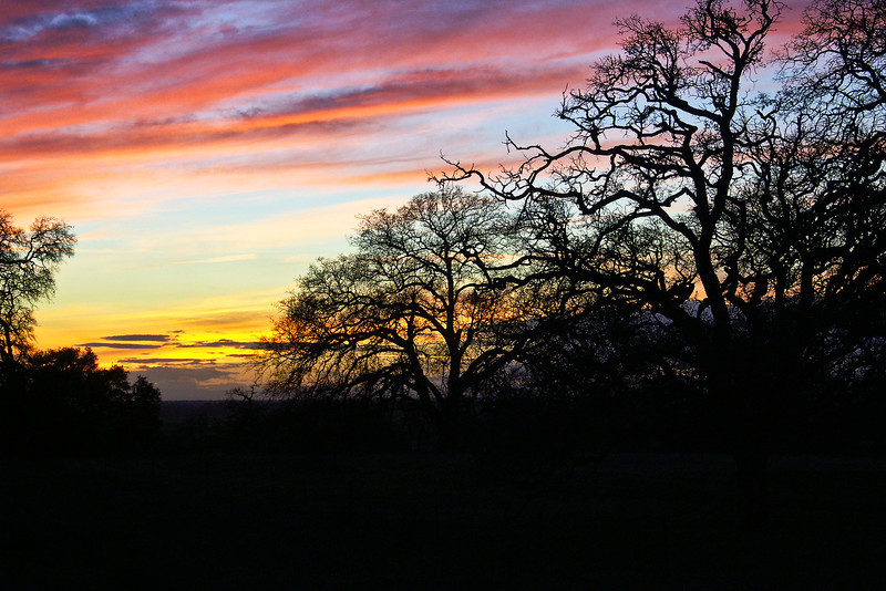 Winter Oak Sunset