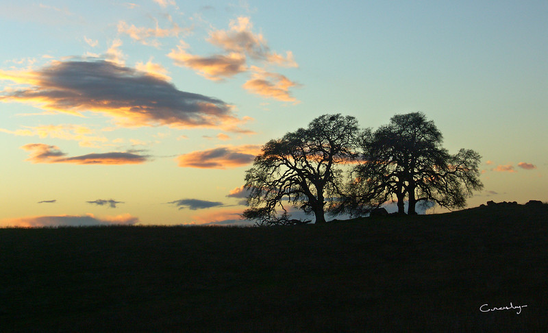 Twin Oak Sunset