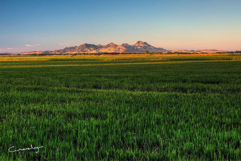 Farm Lands, Sutter Buttes