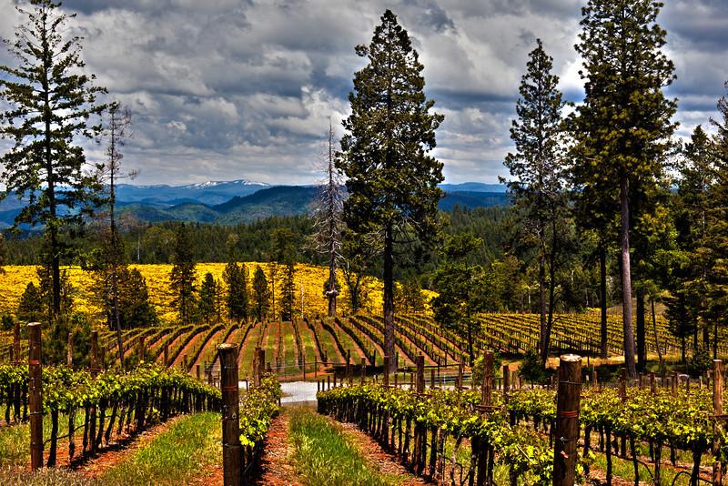 Vineyard on Spanish Dry Diggings Rd , Georgetown, CA TM