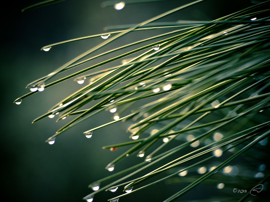 Droplets On Green