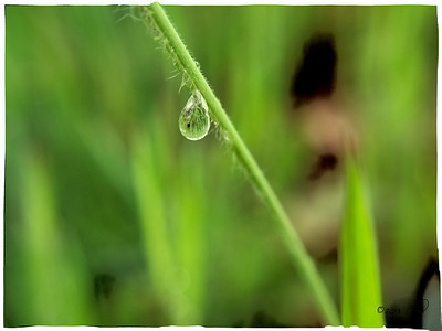 What's In The Droplet