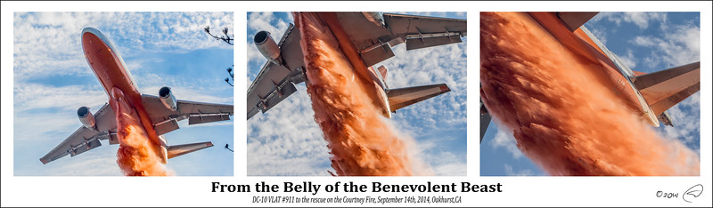 From the Belly of the Benevolent Beast - triptyc