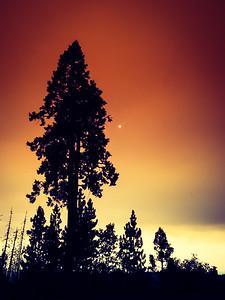 Pines & Smoke
