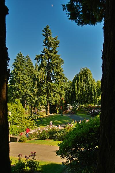 Washington Park, Portland, Oregon Rose test garden.