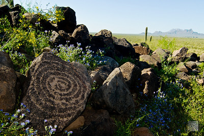 """Cerro Prieto Bloom"", Hohokam Petroglyph, Red Rock, Arizona"