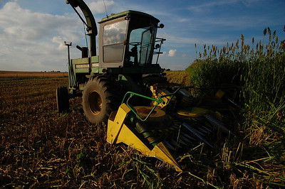 Silage Sept 09