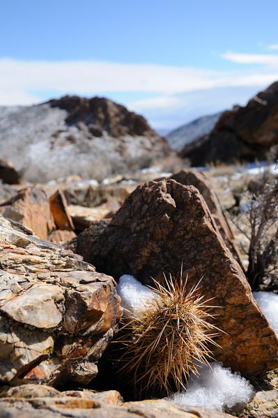 Between a Rock and a Cactus?