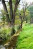 Peaceful Grass