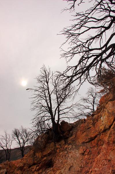 Como, Black Trees, Gray Skys