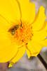 Pollen Bath, Death Valley, CA