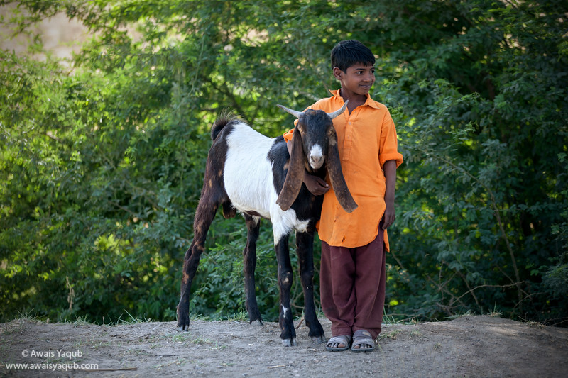 Boy hugs his goat while posing for the photo