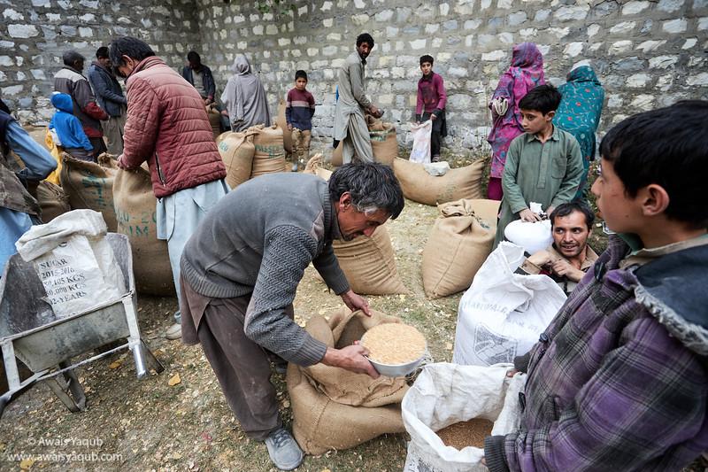 Wheat Distribution