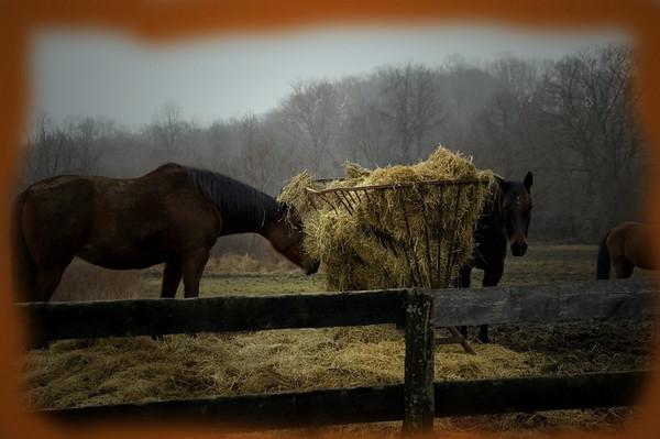 horses near pauls house