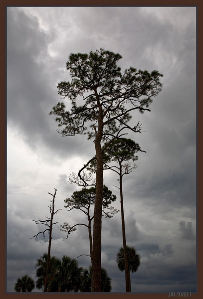 A stormy day at Cape San Blas