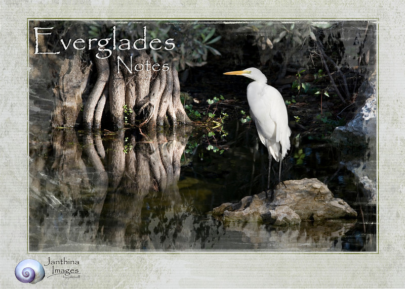 Everglades Notes: The cards in this gallery series are blank inside for writing notes or personal greetings.