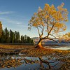 Wanaka tree  at morning ,  New Zealand