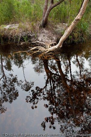 Searys Creek, near Rainbow Beach, Queensland, Australia; June 2010