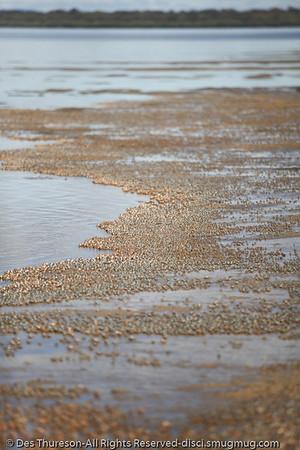 Soldier Crabs at Inskip Point, north of Rainbow Beach, Queensland, Australia; June 2010