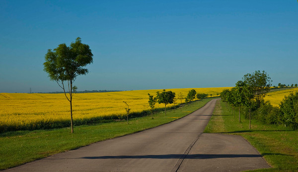 a road leading to a farm surrounded by fields of rape - it just looked great