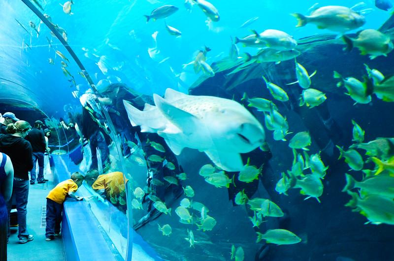 Georgia Aquarium-4092