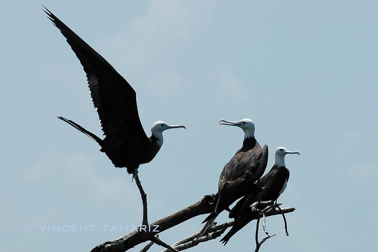 Marine Preserve, Punta Gorda, Belize