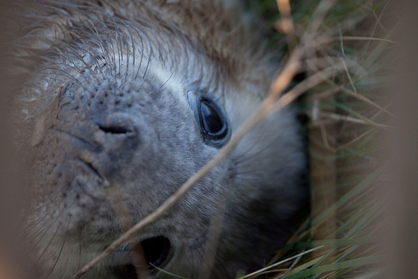 """visited """"donna nook"""" on the east coast to see the grey seal colony"""
