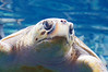 Georgia Aquarium-4197