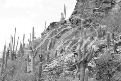 Sabino Canyon in Tucson, AZ