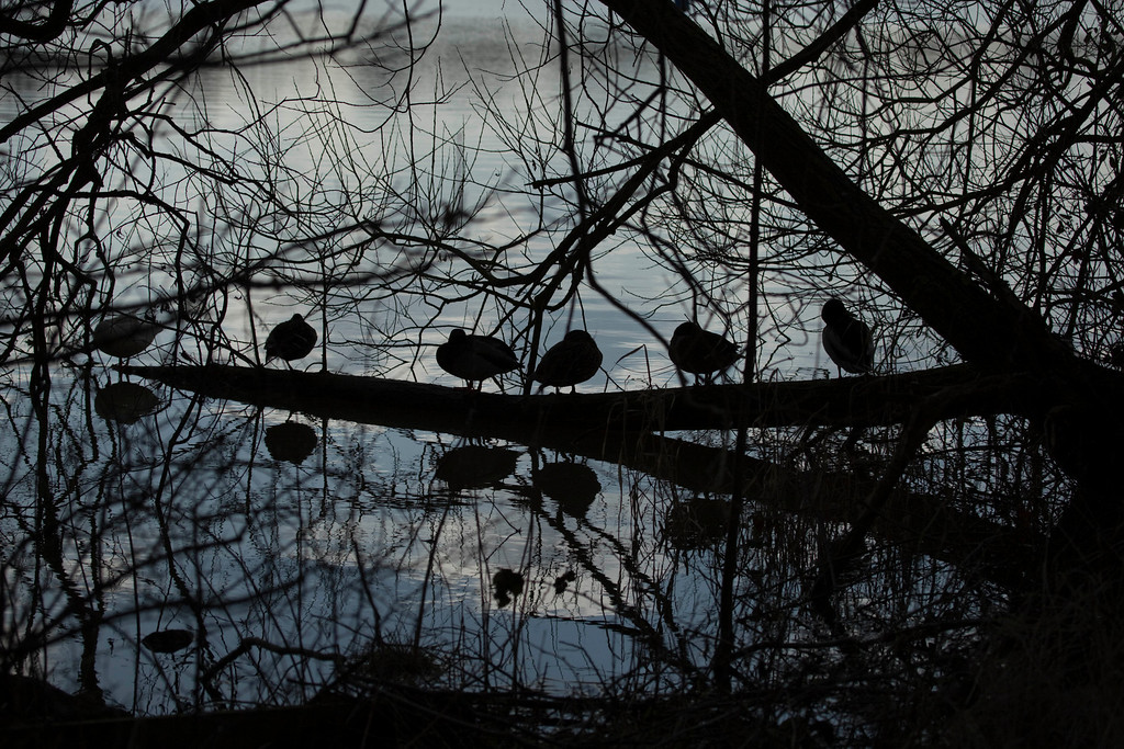 6 coots in a row