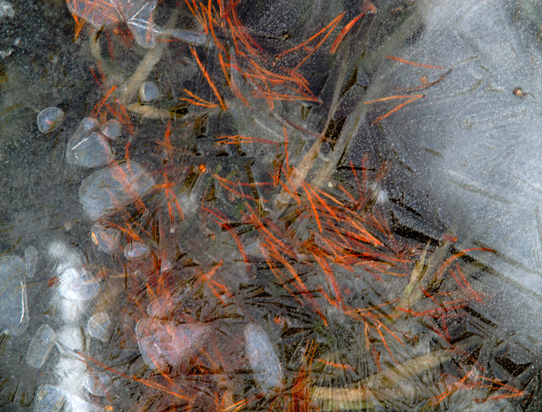 <center><b>Yosemite - Frozen River Ice</b><center><br>During a short hike along a frozen river in Yosemite, I came across a small section where bubbles and pine needles were captured in the frozen ice. I liked the abstract quality as the elements within were blurred by the ice that captured them.