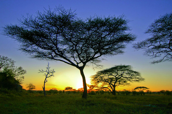 Solnedgang på Serengeti (Tanzania)