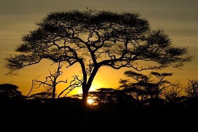 Solnedgang på Serengeti