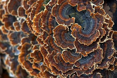 Fungus on a stump.