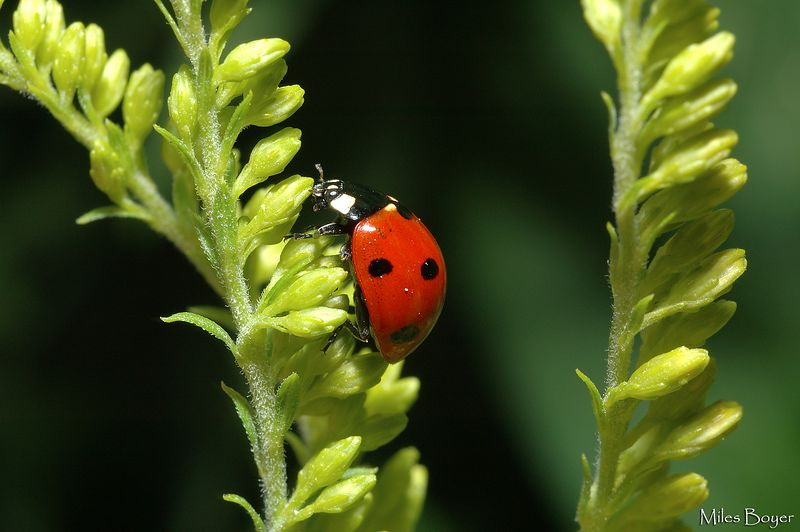 Just a ladybug.