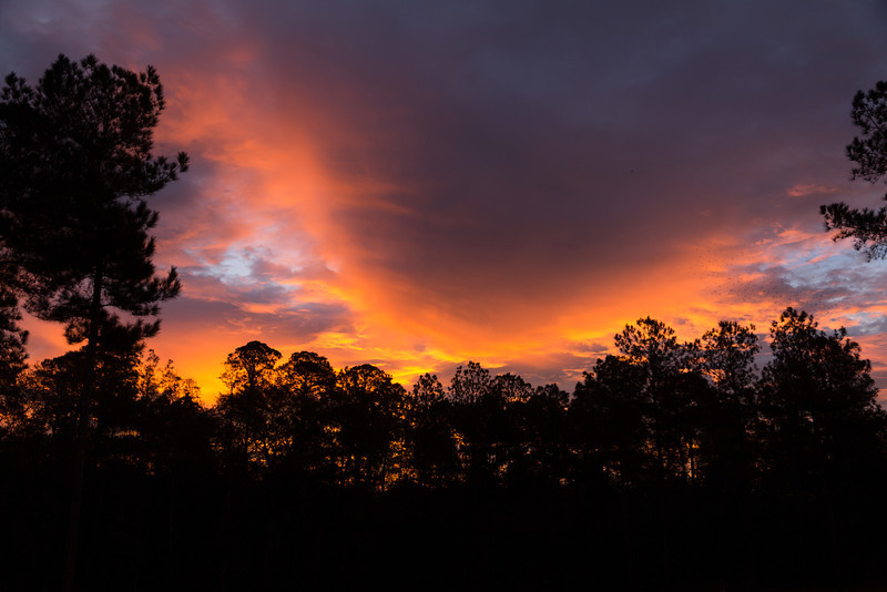 Sunrise Over the Pines