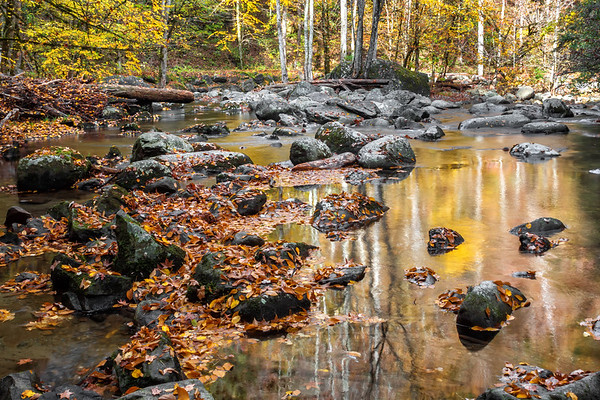 Tremont - The Great Smoky Mountains National Park
