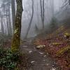 Foggy Alum Cave Bluff Trail