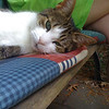 Our cat, flat out, on a very hot day..<br /> (Photo taken with my iPhone 3G, and SmugShot automatically sent it to this page!!)