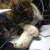 Our cat just dozing off in my IT lab, amidst a pile of networkcables and equipment.<br /> He doesn't care, as long he's close to me AND can sleep.<br /> (Photo taken with my iPhone 3G, and SmugShot automatically sent it to this page!!)
