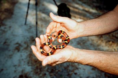 Scarlet Snake # 2