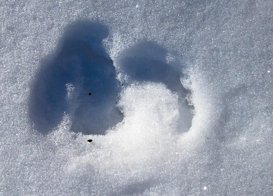 Snow patterns