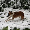 """dashing thru the snow"" rouge was delighted with all the white stuff!"