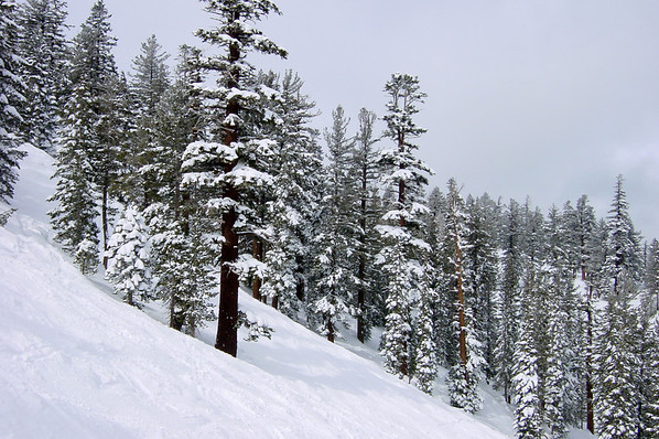 Trees are covered with freshly fallen snow