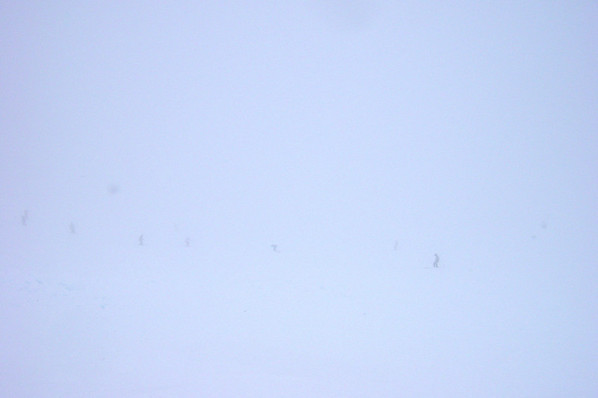 Looking down into the bowl, I see nothing but white